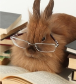 fluffy-bunny-reading_zpse8b402bb